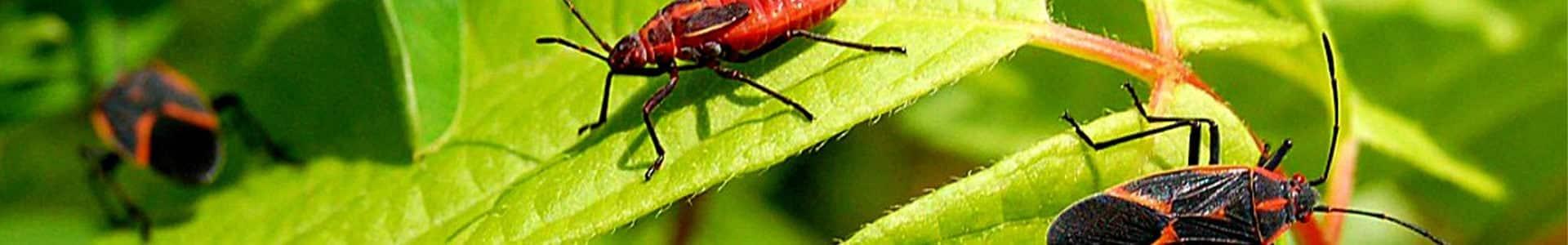 Miscellaneous Pests – Extermination & Pest Control